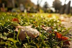Eiken blad in ochtenddauw op een weide in backlit Royalty-vrije Stock Fotografie