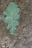 Eiken blad op het asfalt Stock Foto