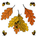 Eiken bladeren en eikels Royalty-vrije Stock Foto's