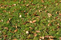 Eiken bladeren op gras Royalty-vrije Stock Fotografie