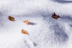 Eiken bladeren over sneeuw Stock Afbeeldingen