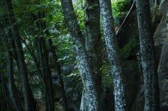 Eiken bomen Stock Foto's