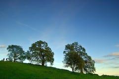 Eiken bomen in de lente royalty-vrije stock afbeeldingen