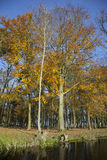 Eiken bomen en bezinningen in kanaal dichtbij Woerden in Netherlan Stock Foto's