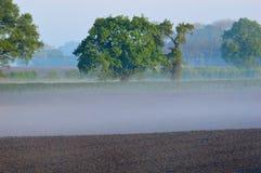 Eiken bomen op een nevelig geploegd gebied Royalty-vrije Stock Afbeeldingen