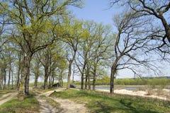 Eiken bomen op rivierbank Stock Fotografie