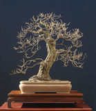 Eiken bonsai in de winter royalty-vrije stock afbeelding