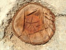 eiken boom Stock Afbeelding