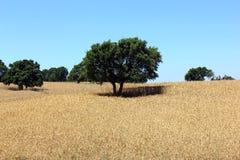Eiken boom, Alentejo, Portugal Royalty-vrije Stock Afbeelding