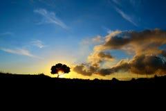 Eiken boom bij zonsondergang Stock Foto's