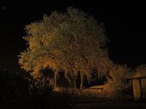 Eiken boom die in sneeuw bij nacht wordt behandeld Royalty-vrije Stock Afbeelding