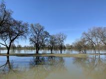 Eiken boom door Rivier -1 van Sacramento royalty-vrije stock afbeelding