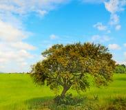 Eiken boom in een groene weide stock fotografie
