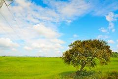 Eiken boom in een groene weide stock foto's