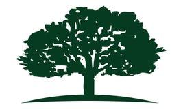 Eiken Boom Logo Design Template stock illustratie