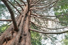 Eiken boom onder bodemmening royalty-vrije stock foto's
