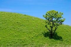 Eiken boom op de groene heuvel Royalty-vrije Stock Foto