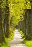 Eiken boomsteeg met voetpad Stock Fotografie