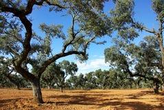 Eiken bos bij mediterraan gebied Stock Foto