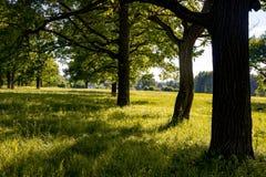 Eiken bosje met een heldere de zomerdag royalty-vrije stock foto's