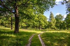 Eiken bosje met een heldere de zomerdag royalty-vrije stock fotografie