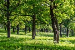 Eiken bosje met een heldere de zomerdag stock foto's