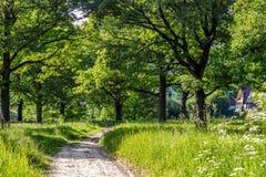 Eiken bosje met een heldere de zomerdag royalty-vrije stock afbeeldingen