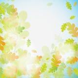 Eiken de herfstachtergrond, vector Stock Fotografie