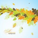 Eiken de herfstachtergrond, vector Stock Foto