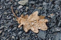 Eiken de Herfstblad op rotsengruis Royalty-vrije Stock Afbeelding