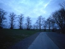 Eiken die zich op het landbouwbedrijf in lijn bevinden Royalty-vrije Stock Foto