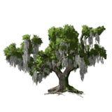 Eiken geïsoleerde boom. Vectorillustratie Stock Afbeelding