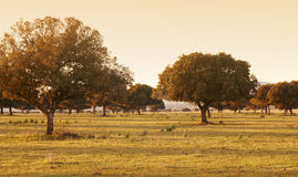 Eiken holm, ilex in een mediterraan boscabaneros-park, Spanje Royalty-vrije Stock Fotografie