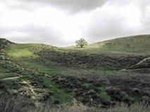 Eiken Tribunes alleen in Zonlicht op Groene Grasrijke Heuvel stock afbeeldingen