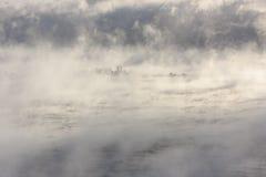 Eiland in een vochtig water Royalty-vrije Stock Foto's