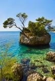Eiland en bomen in Brela, Kroatië Stock Foto's