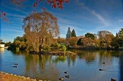 Eiland in het meer royalty-vrije stock fotografie