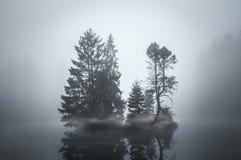 Eiland van Bomen door Mist worden gescheiden die royalty-vrije stock foto