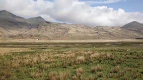 Eiland van Mull Schotland het UK landelijke plattelandsscène met mening aan de bergen van Ben More en Glen More-op de schapenpan  stock videobeelden