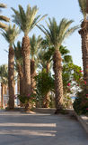 Eilat Stock Photography