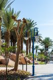 EILAT, ISRAEL – November 7, 2017: City promenade with palm trees, lanterns, going into the distance royalty free stock photography