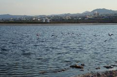 Flamingos rests in the birding park. Eilat, Israel - July 17 2018: Flamingos rests in the birding park stock photos