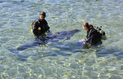 EILAT, ISRAEL - NOVEMBER 30, 2016: Dolphin nature reserve near Eilat Royalty Free Stock Image