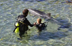 EILAT, ISRAEL - NOVEMBER 30, 2016: Dolphin nature reserve near Eilat Royalty Free Stock Photography