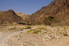 Eilat mountaisflod Netafim Arkivfoto