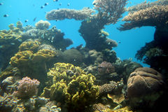 eilat seglar undersea Royaltyfri Bild