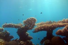 eilat seglar undersea royaltyfria foton