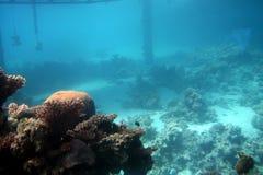 eilat seglar undersea Royaltyfri Foto
