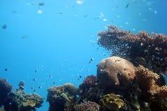 eilat seglar undersea Arkivfoto