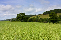 Eildon Hills rapeseed Stock Photography